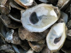 Facts about Oysters
