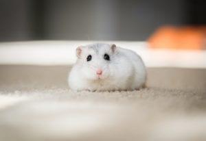Fun Hamster Facts