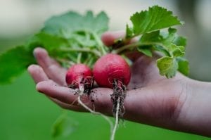 Hints Vegetable Growing Facts