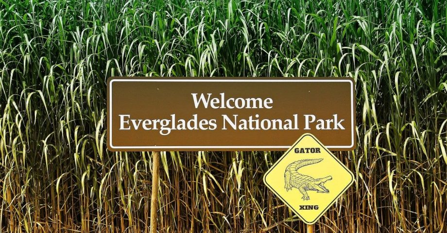 Interesting facts about the Everglades