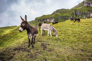 Donkeys on a hillside