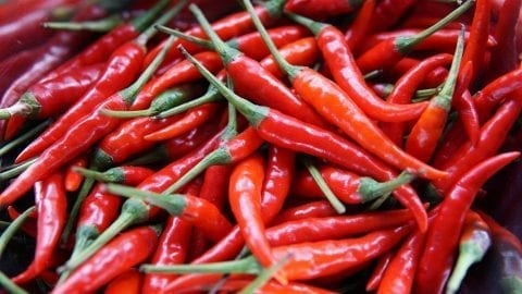 facts about chili