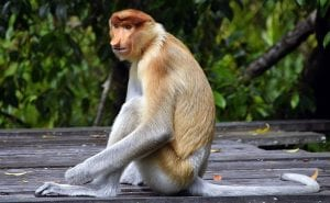 Fun Facts about Borneo