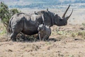 Fun Rhino Facts