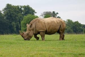 Fun facts about Rhinos