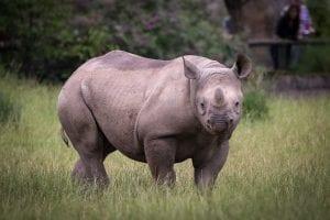 Interesting rhino facts