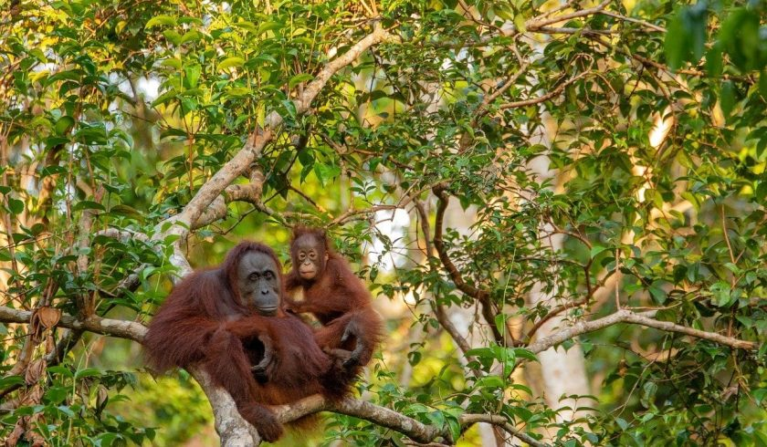 facts about Borneo