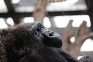 monkey at London Zoo