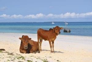 interesting facts about Zanzibar