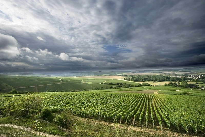 facts about chablis 3
