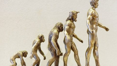 facts about evolution