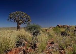 facts about the Kalahari desert