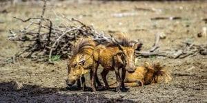 fun Kalahari Facts