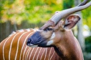 interesting facts about antelope