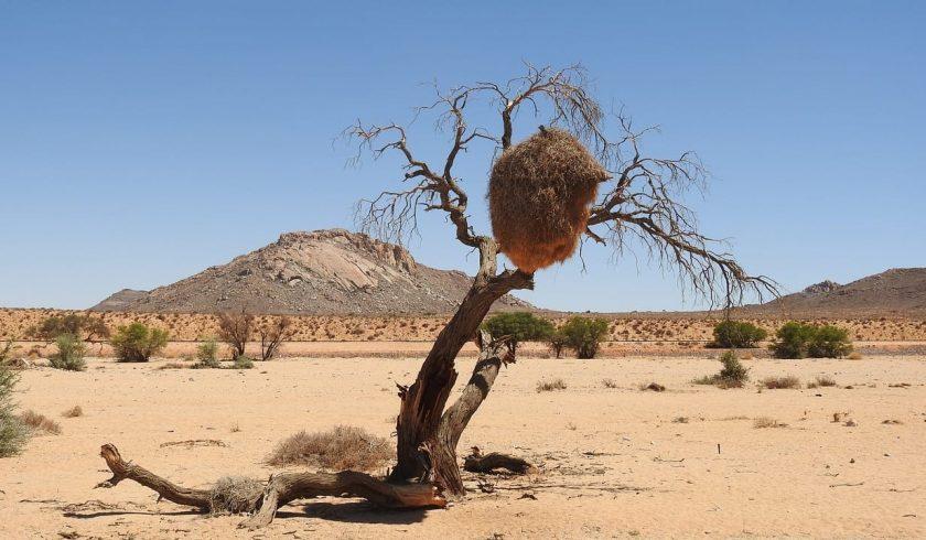 interesting facts about the Kalahari Desert