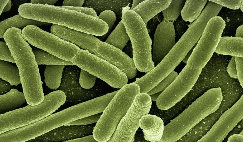 FACTS ABOUT BACTERIA