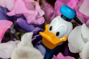 Facts about Donald Duck