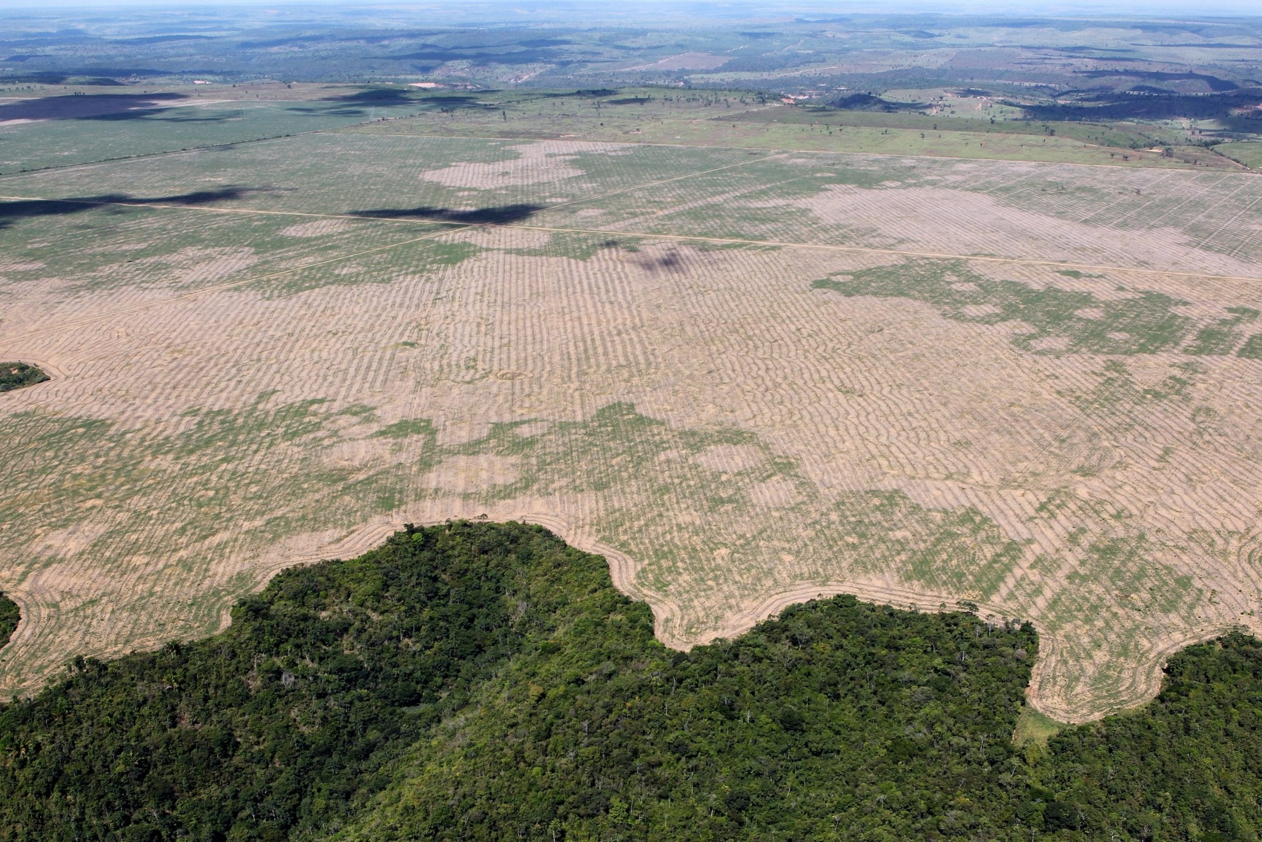 facts about deforestation