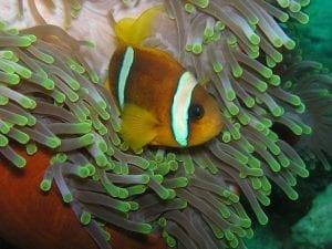 Andaman Islands Facts