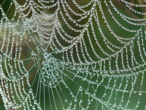 A spiders web in the morning