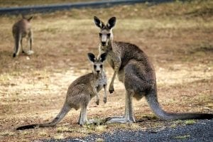 facts about queensland