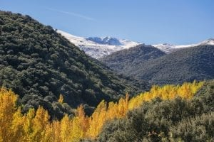 fun facts about sierra nevada