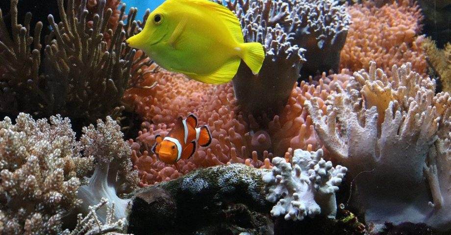 Fun fact about Tropical Fish