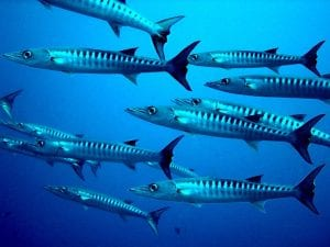 interesting facts about tropical fish