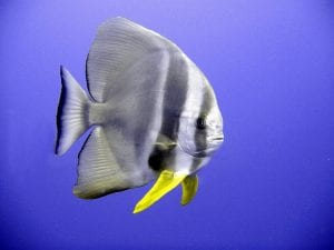 Tropical Fish Facts