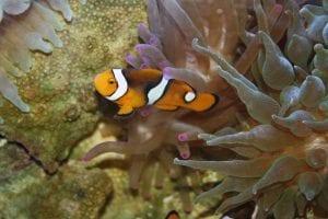 fun tropical fish facts