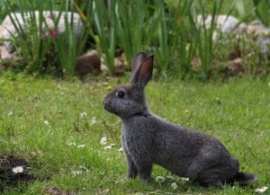 cute facts about rabbits