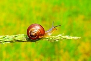 fun facts on snails