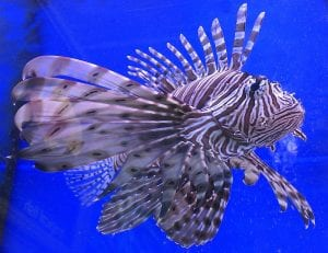 Fun facts about tropical fish