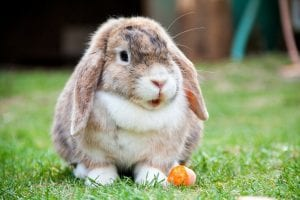 interesting rabbit facts