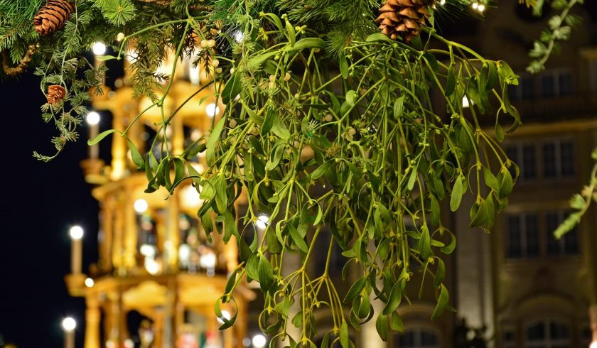 Mistletoe facts