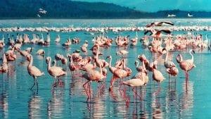 pink flamingo 1484781 1280