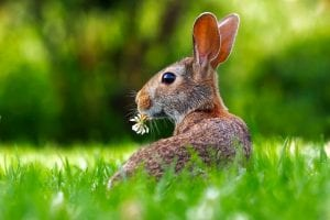 interesting facts about rabbits