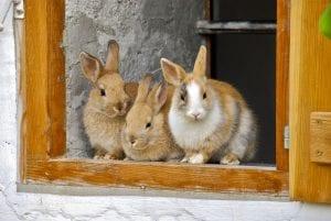 Fun Rabbit Facts