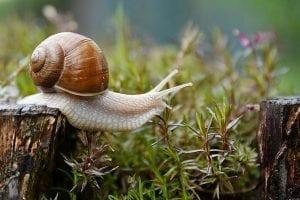snail 4729777 1280