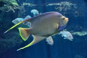 Facts about tropical fish
