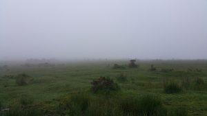 a foggy Bodmin Moor