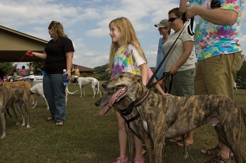 facts about greyhounds