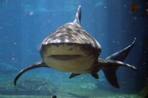 shark ushaka marine world 1526509 639x426 1