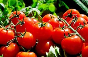 Home grown tomatoes on the vine