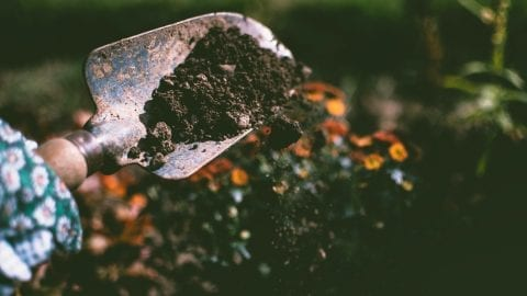 facts about soil