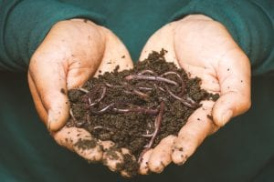 fun facts about soil