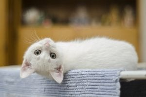 fascinating facts on cats