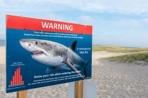 Warning Sign on Beach about Great Whites