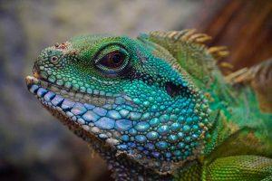 a multicolored exotic lizard